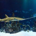 Właściwości oleju z wątroby rekina